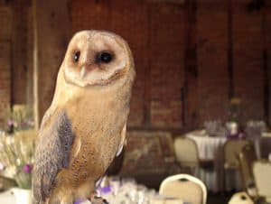 Red Barn - owl